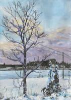 Vaahtera talviasussa by KorsonOraakkeli