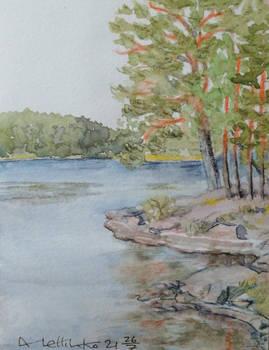 Lakeside pines