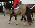 horse38