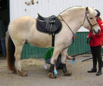 horse39