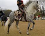 horse55