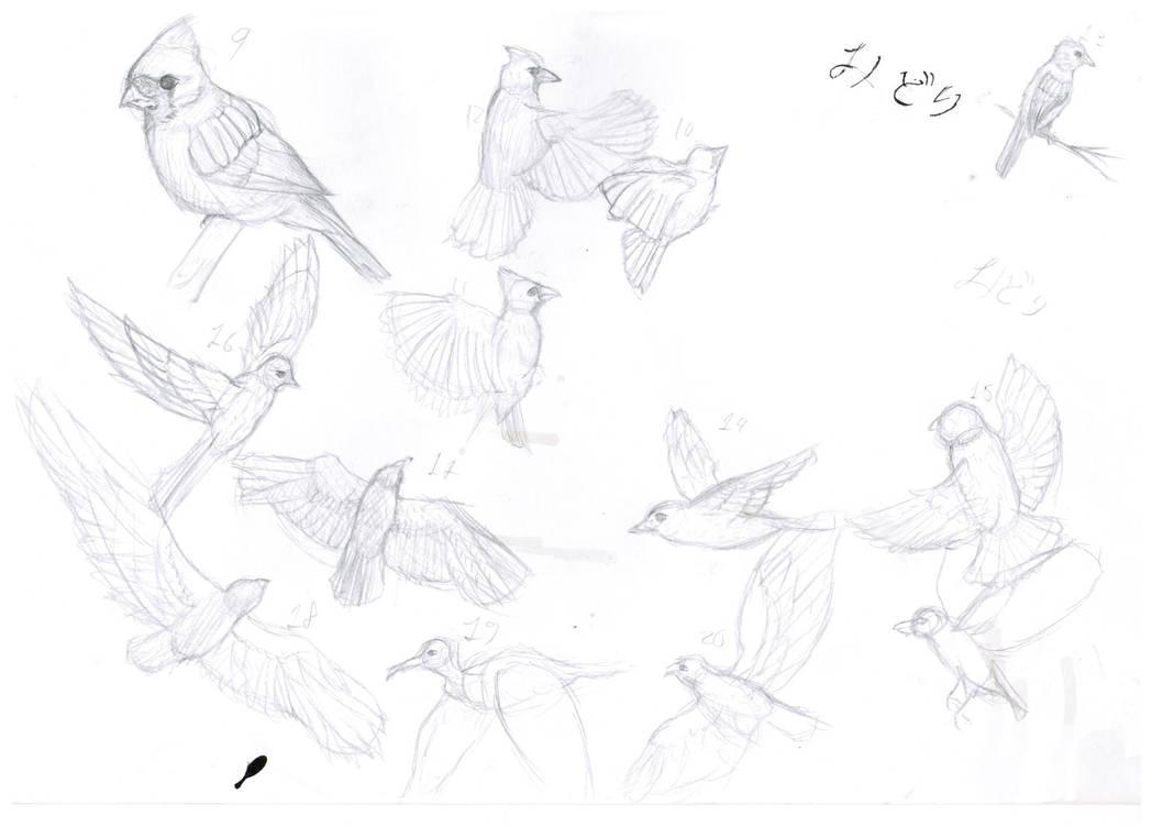 Bird Movement Practice By Sshmdraws On Deviantart