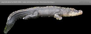 PNG STOCK: Crocodile