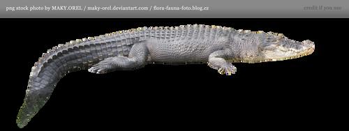 PNG STOCK: Crocodile by MAKY-OREL
