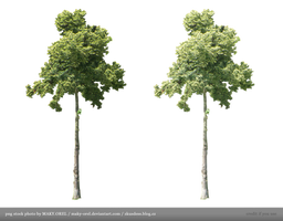 PNG STOCK: Tree by MAKY-OREL