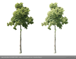 PNG STOCK: Tree