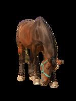 Horse 1 by MAKY-OREL