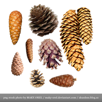 PNG STOCK: Conifer cones - pine, spruce and more