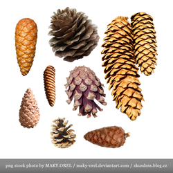 PNG STOCK: Conifer cones - pine, spruce and more by MAKY-OREL