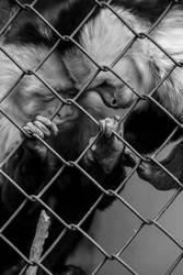 Caged -2