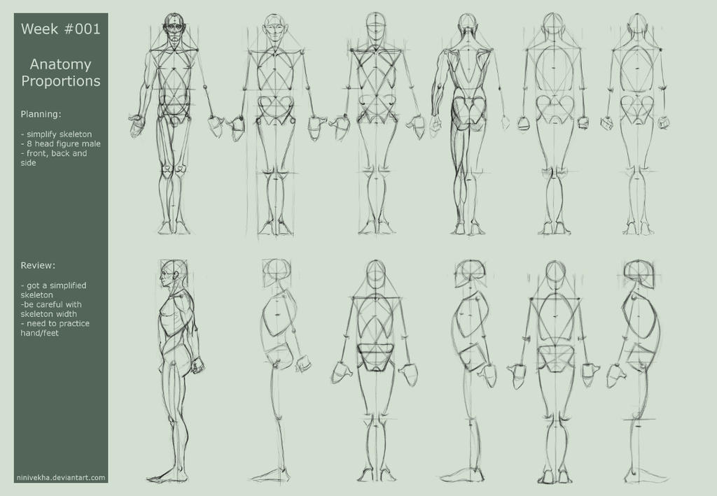 Week 001 anatomy proportions da by ninivekha on deviantart for Size and proportion