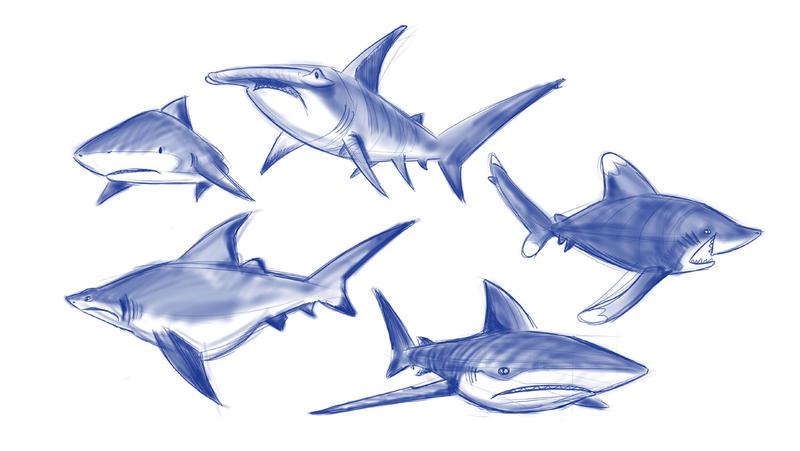 Shark Week by Sibsy
