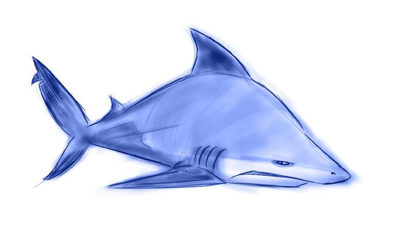 Shark Week III and a half by Sibsy