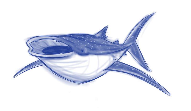 Whale Shark Line Art : Whale shark by sibsy on deviantart