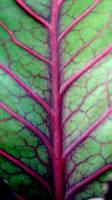 veins by KatDiestel
