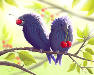 Cherry Eaters!