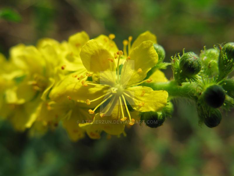 Medicinal herb by AtelierZUN