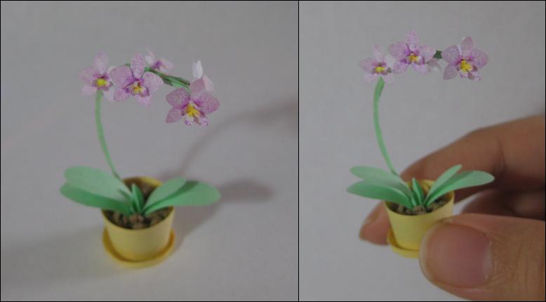 Orchid by SkulkingYegg