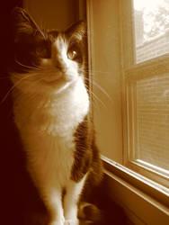 Window Cat by Verdaera