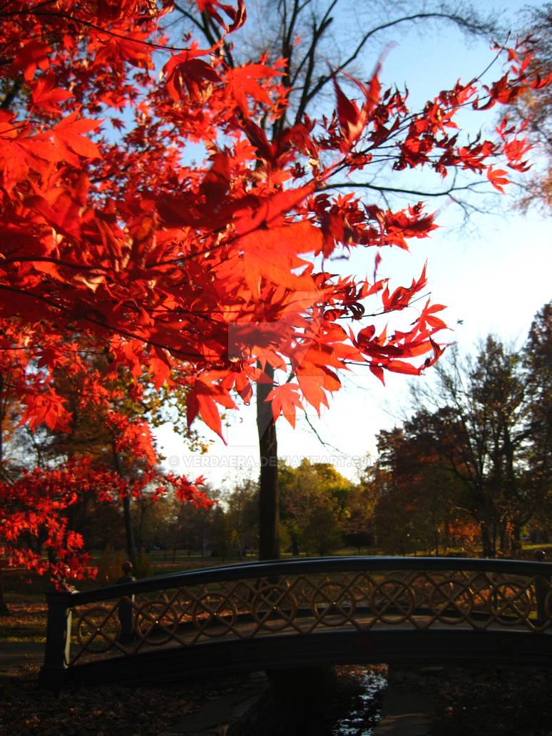 Blood Red Autumn 01