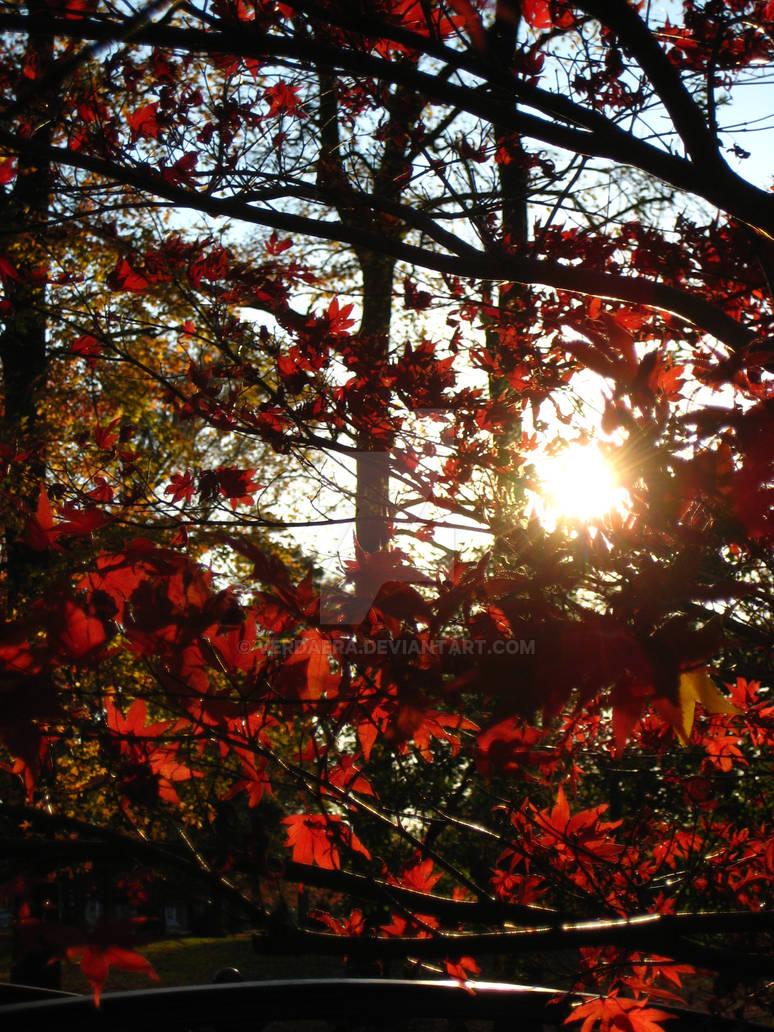 Blood Red Autumn 02