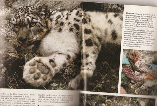 Snow Leopard - NatGeo Magazine - June 1986