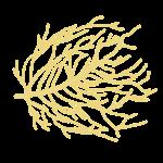 Tumbleweed by Hellusination