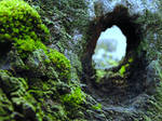 Moss-scape IV