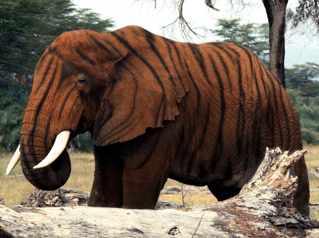 Tiger elephant by qzr1