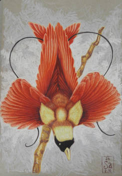 Febirdary #7: Bird of Paradise