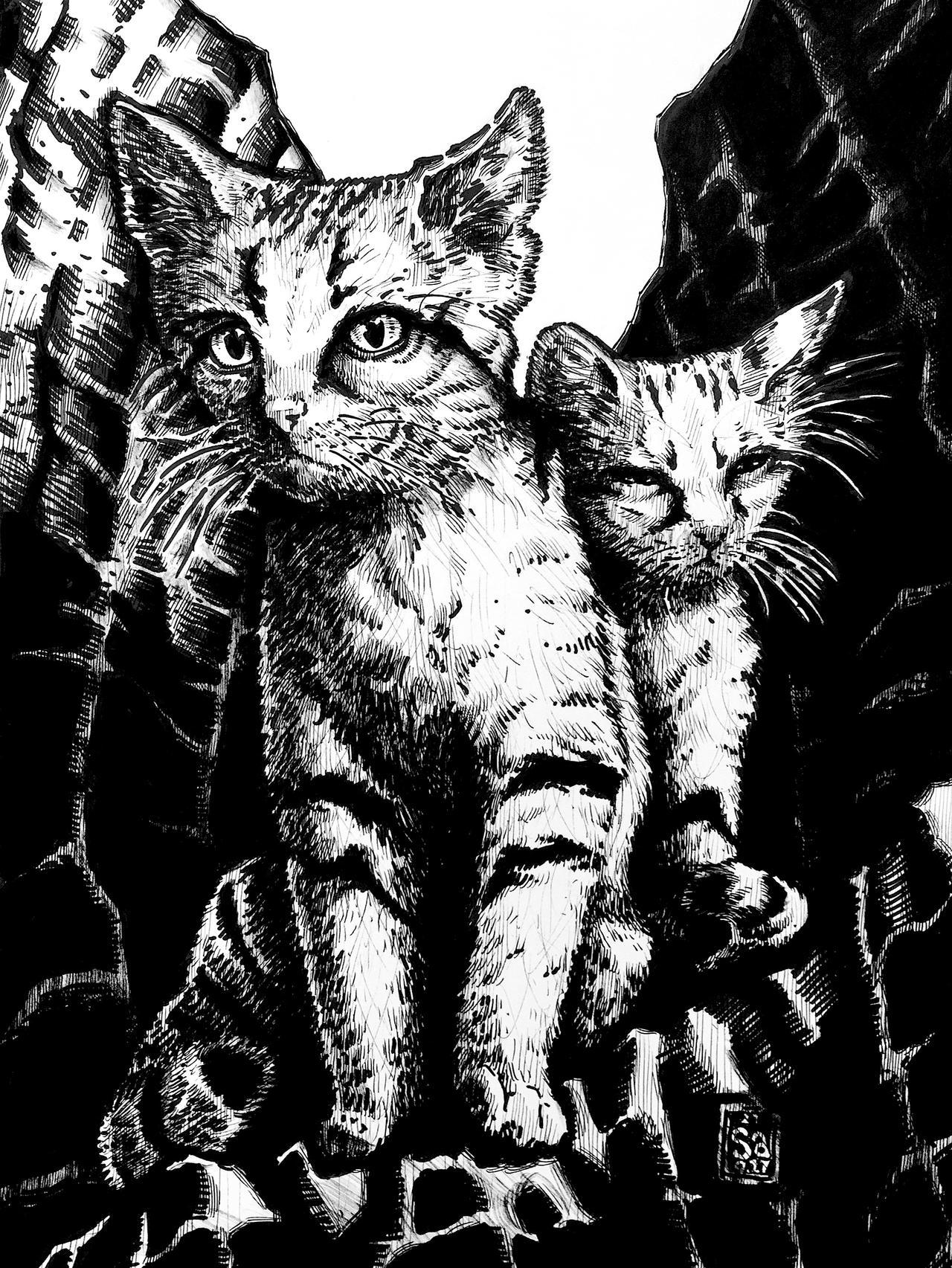 Sand Cats (Felis margarita)