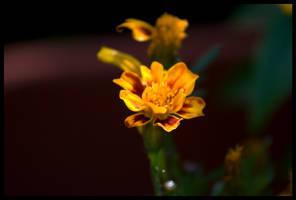 in the garden 001 by kymw