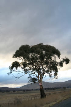 High speed tree