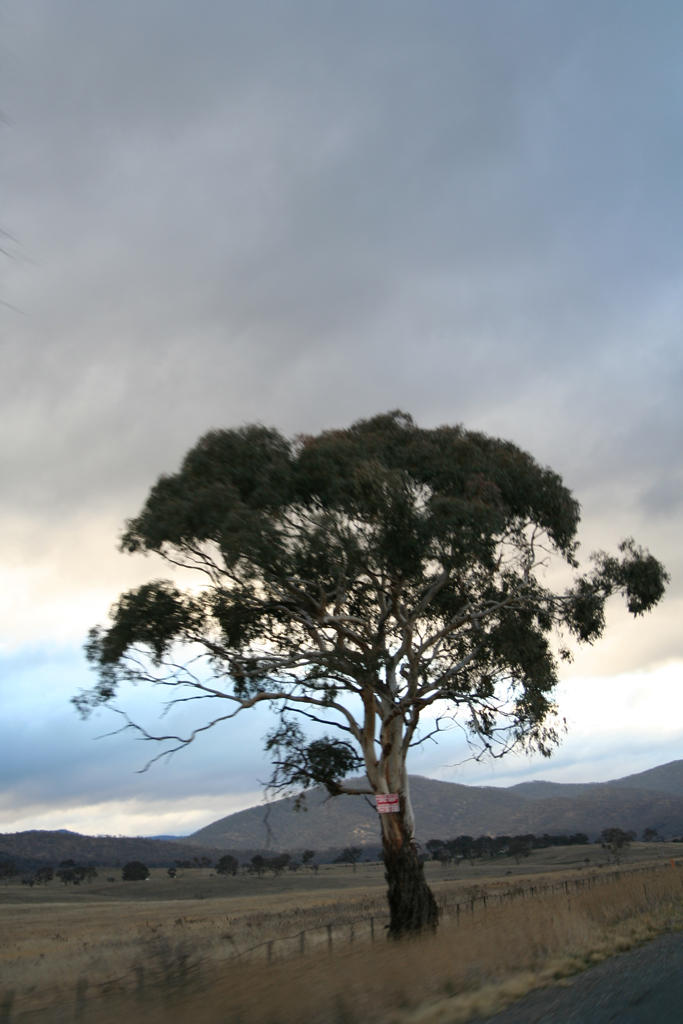 High speed tree by kymw