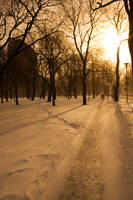 A_cold_sunny_Day001 by kymw