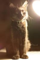 Retro Kitty by xmisslizx