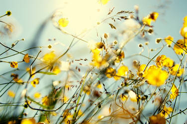 Sol och blomdoft i melodin by Lemonwedge