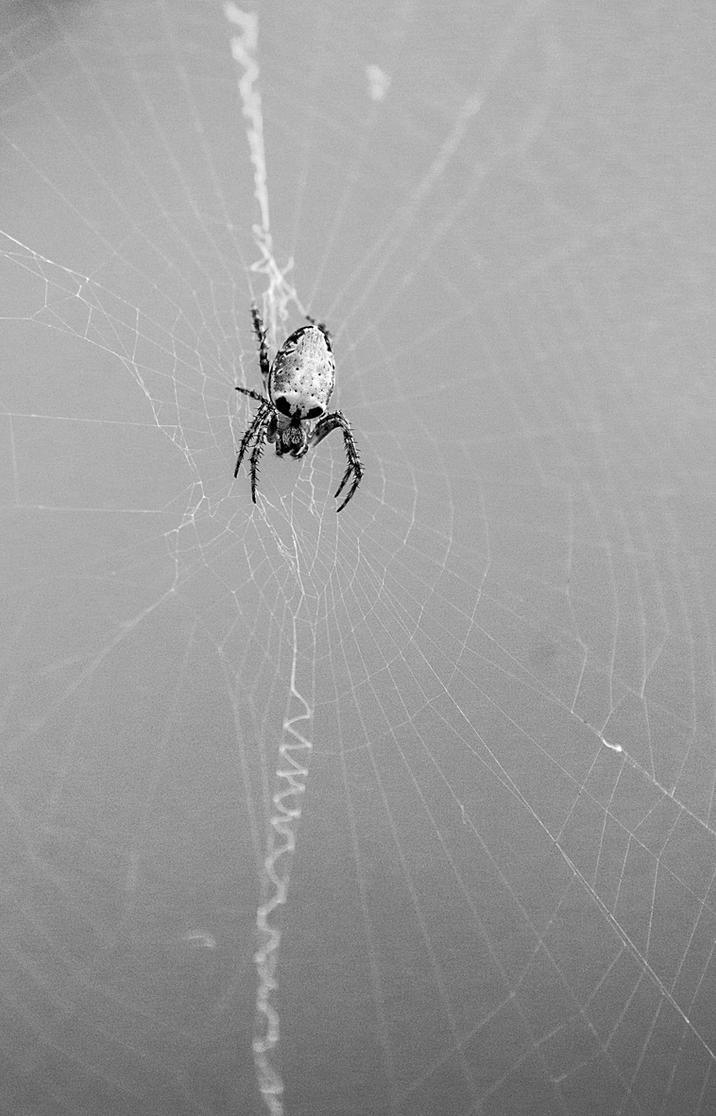 Skull spider by AaronJJenkins