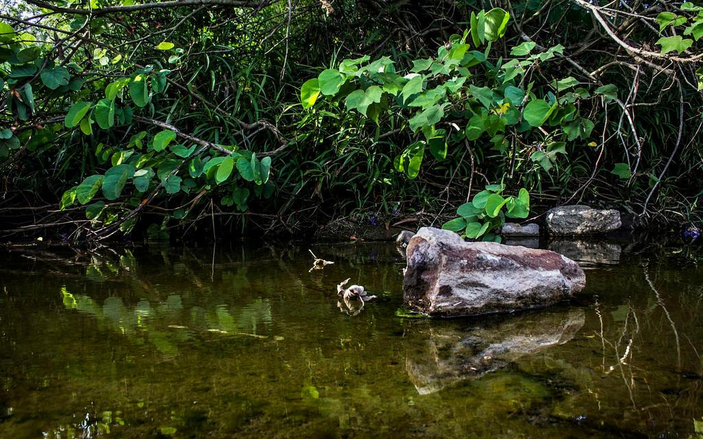 Pretty sewerage by AaronJJenkins