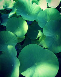 Fifty shades of Green 3 by Caroo999