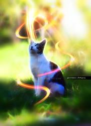 The Thinking Cat