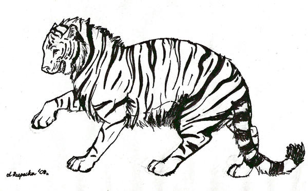 Line Art Tiger : Tiger lineart by suicune on deviantart