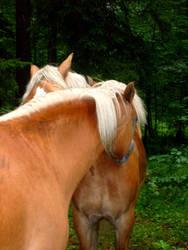 horses c: by JulchenBunny