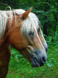 some horses by JulchenBunny