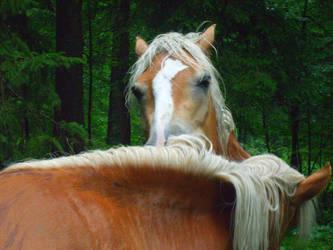 pferde by JulchenBunny