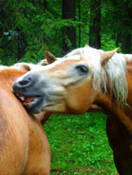 again horses by JulchenBunny