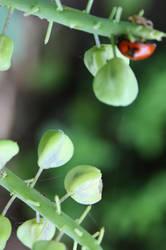 Ladybug by JulchenBunny