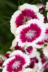 a Flower by JulchenBunny