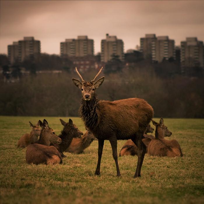 Deer In Richmond Park II By Jez92 On DeviantArt
