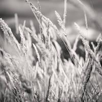 Grass by Jez92